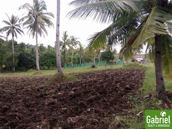 farm lot in borbon, cebu
